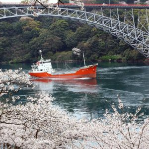 Famous cherry blossoms in the Nishikyushu Sasebo area (only Japanease)